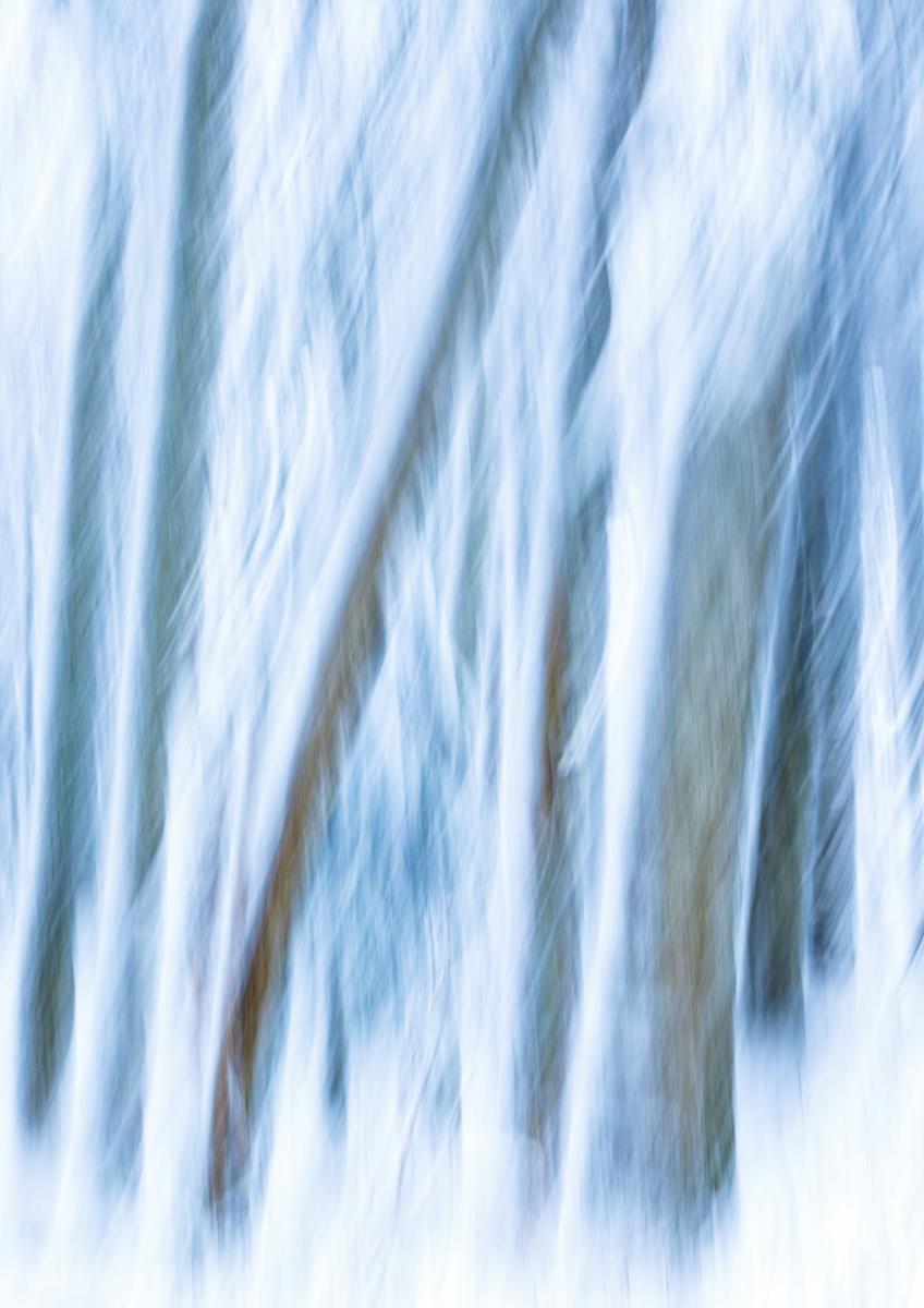 Evanescence hivernale #01