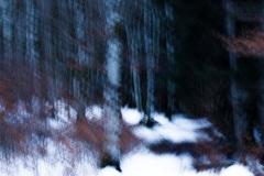 Evanescence hivernale #02